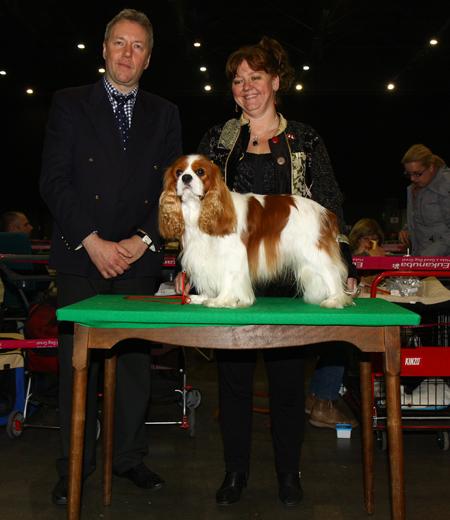 Royal Doulton at Kingsoak - Louvaniumtrofee Leuven 2011 CAC-CACIB-BOB